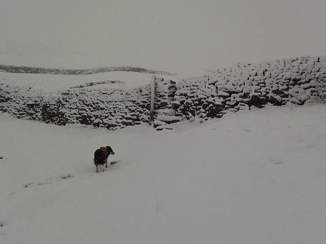 The snowy scenes in the Yorkshire Dales today. Photo: Swaledale Mountain Rescue
