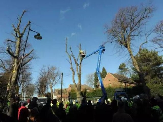 Thousands of trees have been felled in Sheffield
