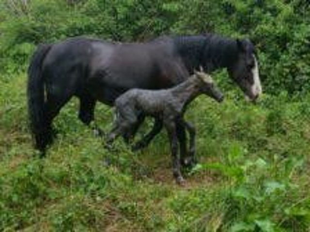 The foal back with its mother following the rescue.