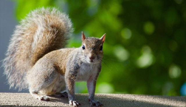 You don't have to worry about bubonic plague carrying squirrels quite yet (Photo: Shutterstock)