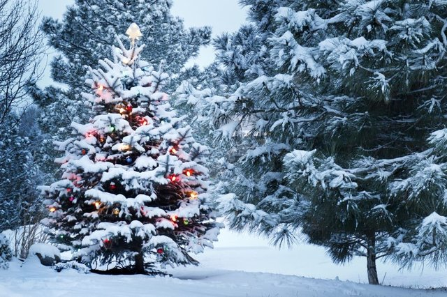 Will It Be A White Christmas For 2020 These are the chances of a white Christmas in 2020   and how the