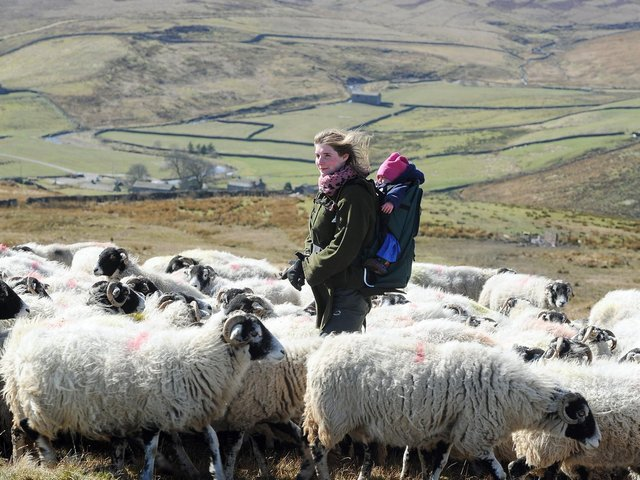Sheep farmer Amanda Owen - better known as TV and social media star the Yorkshire Shepherdess - at Ravenseat Farm in Swaledale