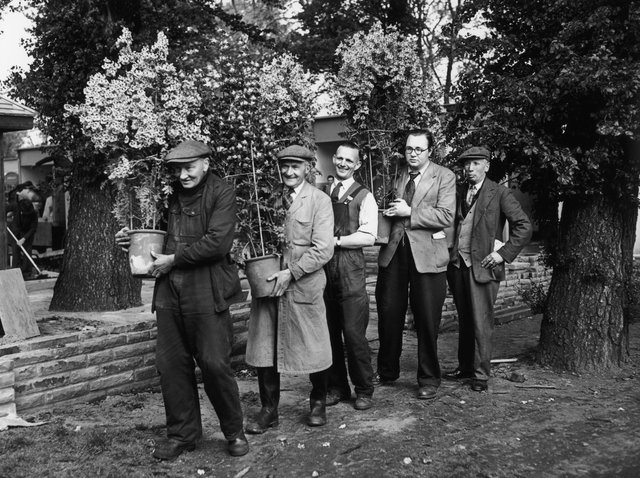 Gardeners carry flowers into the grounds of the Royal Hospital Chelsea, in preparation for the Chelsea Flower Show, 23rd May 1955. (Photo by Reg Speller/Fox Photos/Getty Images)