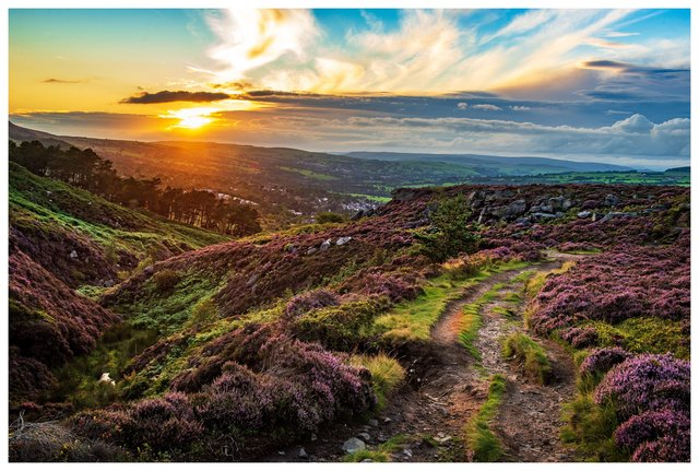 The sun setting over Ilkley Moor which is covered with purple flowering heather. Picture Bruce RollinsonTech Details: Nikon D4, 24-70mm Nikkor lens, 125th sec @f8, 400iso.