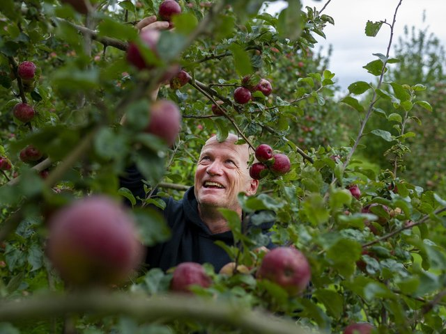Cider producer Rob North in the apple orchard at Pure North Cider, in Netherthong, Holmfirth