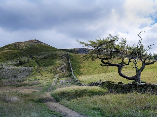 The footpath leading up Little Roseberry from Roseberry Topping in the North York Moors National Park. August 24, 2020. Technical information: Fujifilm X-T3 camera with a 23mm lens, exposure of 1/300th second at f9, ISO 160. Picture: Ian Day