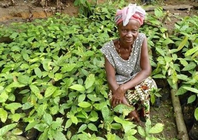 The latest Farmers' Voice Radio initiative is taking place in Sierra Leone.