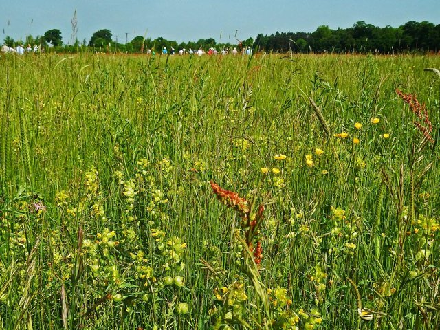 More than 1,000 invertebrates have been recorded at the Three Hagges Woodmeadow Project