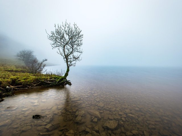 A tree in the mist on the banks of Malham Tarn. Technical Details:  Nikon D4, 17-24mm Nikkor, 30sec @f8, 100iso,  6 stop ND filter.  Picture Bruce Rollinson