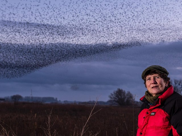 Jo Webb, who has recently become chair of the Yorkshire Wildlife Trust. Photo: Ernesto Rogata