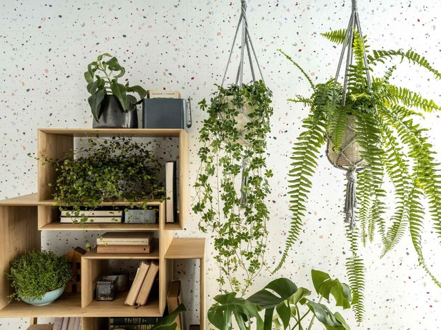 Sarah is a fan of biophilic design both at home and at work and uses plants to create feel-good factor