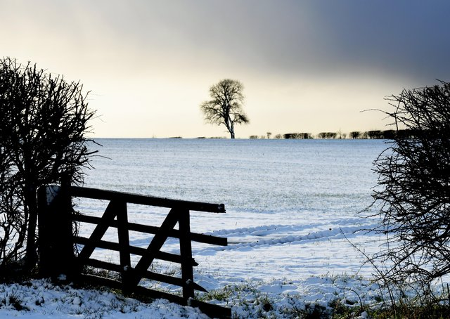 Snow covered fields around a lone tree under a heavy sky  at the top of Garrowby Hill on the Yorkshire Wolds .  Picture: Gary Longbottom