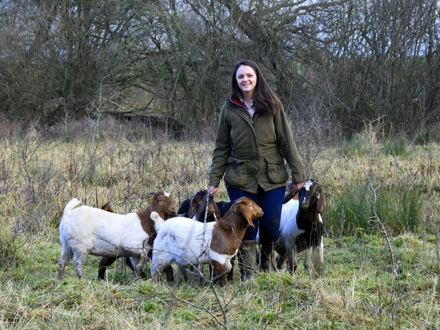 The goats are conservation grazing at Tophill Nature Reserve