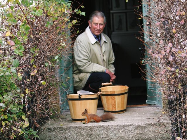 The Prince of Wales has sent a message of thanks to volunteers working to save native red squirrels.