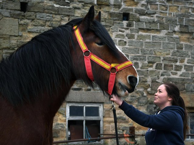 Megan has been involved with Shire horses her whole life through her mum, Emma and grandfather John Richardson.