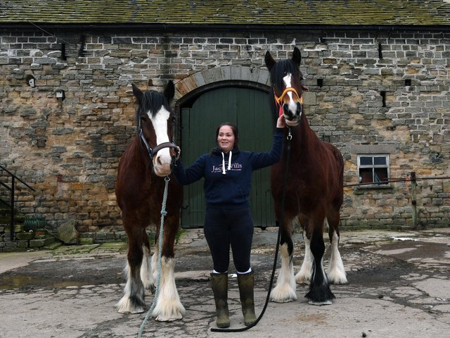 Megan Hoyle with two of her shire horses