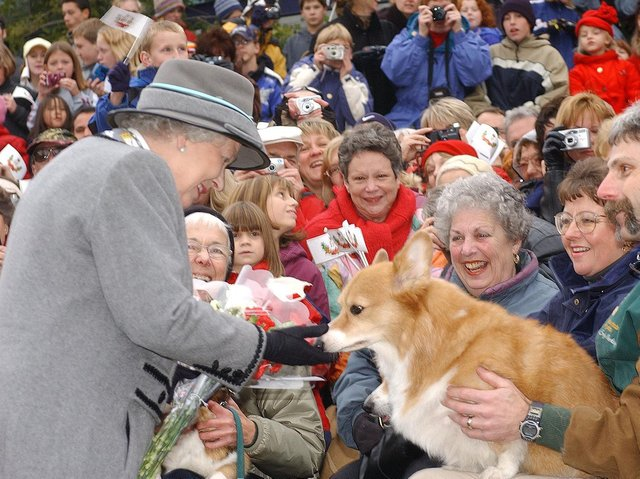 Queen Elizabeth II admiring a corgi from the Manitoba Corgi Association as she meets the crowd at The Forks in Winnipeg, Manitoba