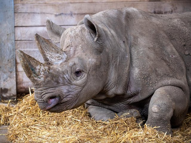 Chanua will be starting a new chapter in her life when she is released in Tanzania Picture: Bruce Rollinson