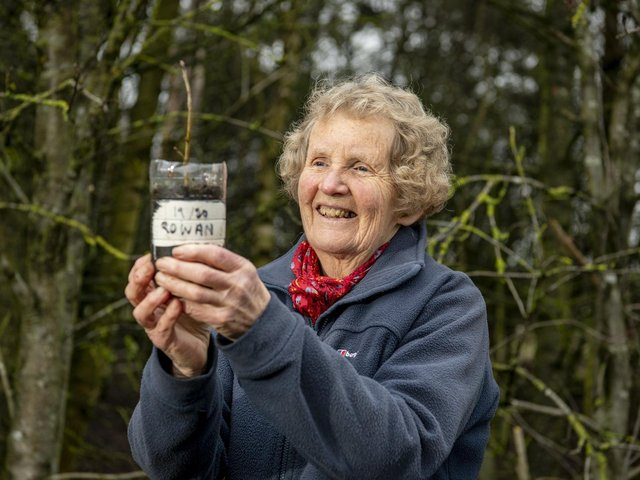 Janet Willoner with a rowan sapling in the copse where she collected the seeds near her home in Boroughbridge. Picture Tony Johnson.