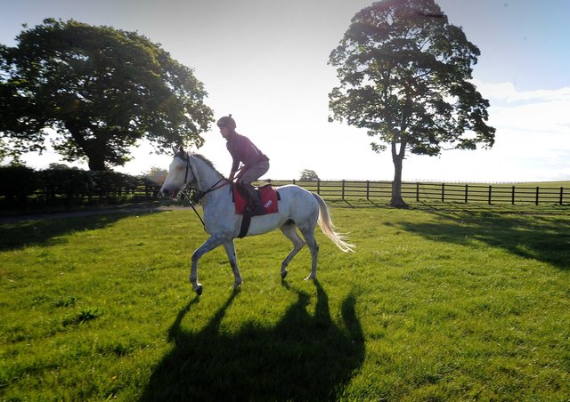 This was Lord Glitters blossoming at David O'Meara's stables last summer. Photo: Simon Hulme.
