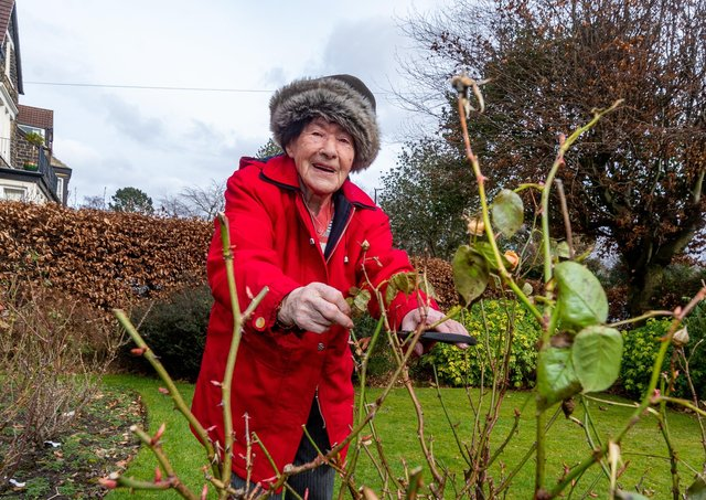 Margaret Marshall, of Leeds,  is 100 year old has had a knee replacement which means she can once again take care of her garden and most importantly her roses.Picture James Hardisty