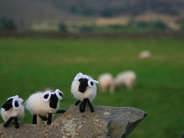 Glen the Glencroft Model Sheep £2.95 at Glencroftcountrywear.co.uk