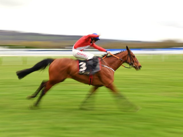 QUICK: The speedy Envoi Allen who has never lost. Photo by Dan Mullan/Getty Images.