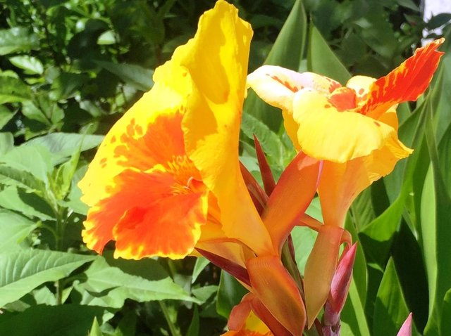 It's a good time to plant summer-flowering bulbs such as canna lilies.