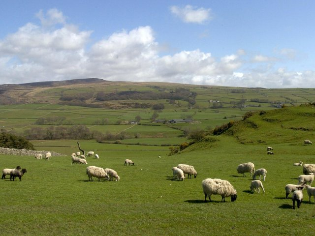 Lambing time is always a blur of emotions and sometimes there is tragedy. (JPIMedia).