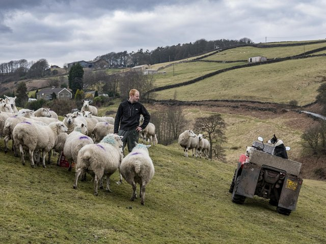 Philip Mellin and his mother Carol are renowned sheepdog triallists