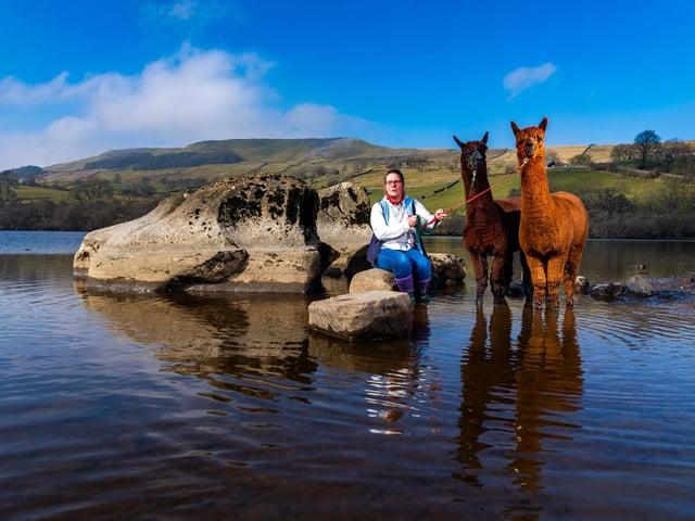 Jackie Masterman and her alpacas paddling in Semerwater