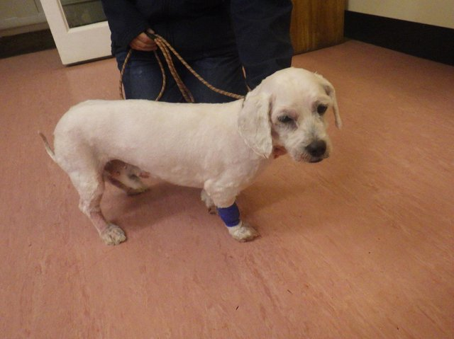 Dog Marley was found with fur so matted that nobody knew what breed he was. Pictures: RSPCA