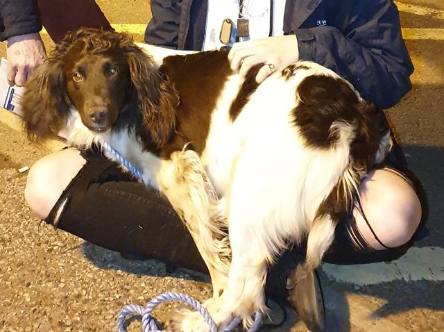 Cressy has been reunited with her owners in Northampton.