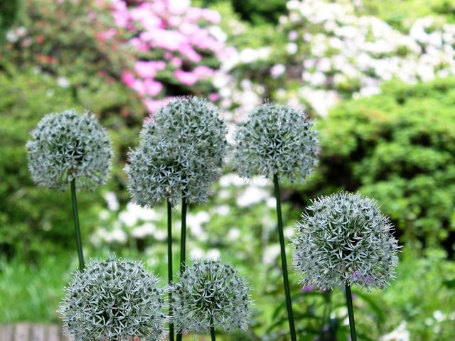 Plant summer-flowering bulbs if you haven't already.