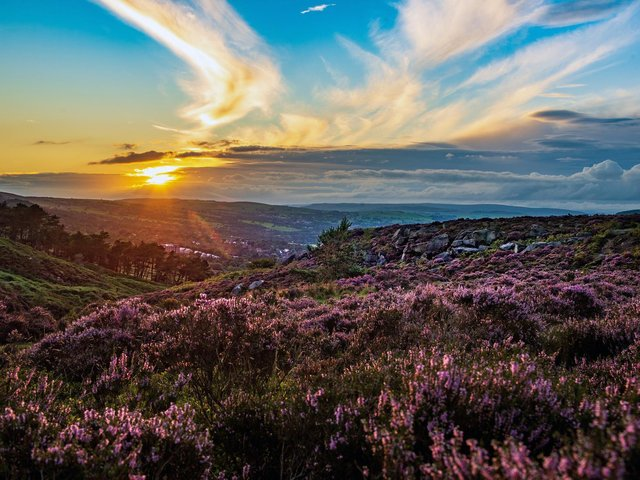 Pictured, the sun settiing over Ilkley Moor which is covered with purple flowering heather, last Summer. Photo credit:  Bruce Rollinson/JPIMediaResell