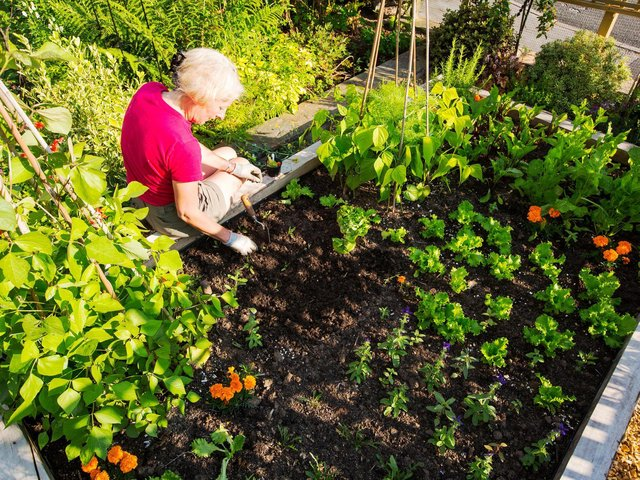 A woman making use of a raised bed.