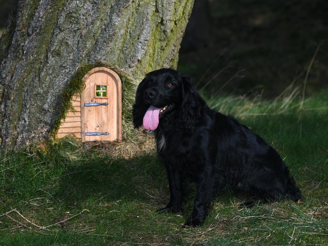 Fairy doors and windows have been implemented on trees at The Hutts Himalayan Gardens near Ripon