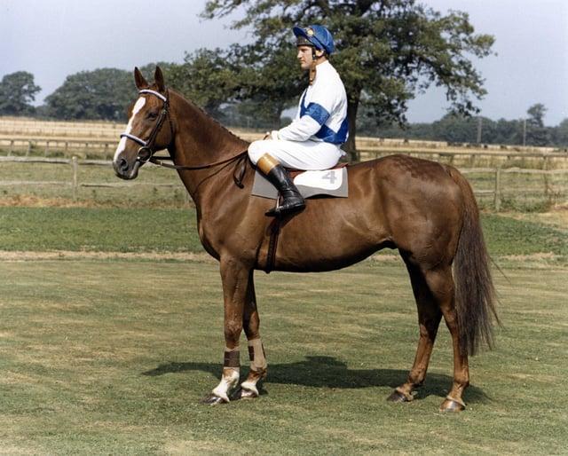 Bob Champion and his 1981 Grand National hero Aldaniti.