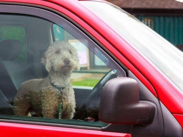 Police say they have had a number of calls about dogs in cars during the hot weather