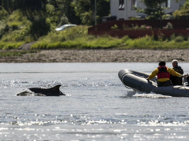 Dolphins face an increasing risk of disturbance from people taking to the sea on boats, jet skis, paddleboards and kayaks as lockdown eases, campaigners have warned.