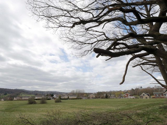 The old oaks have been illegally cut