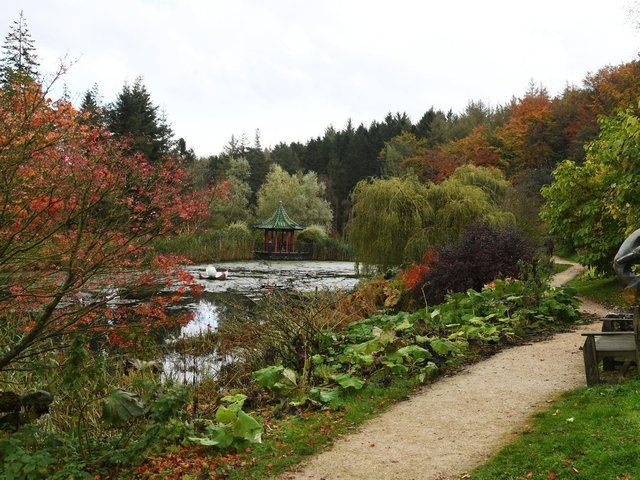 Ripon's Himalayan Garden. Do you have a space which could look like this?
