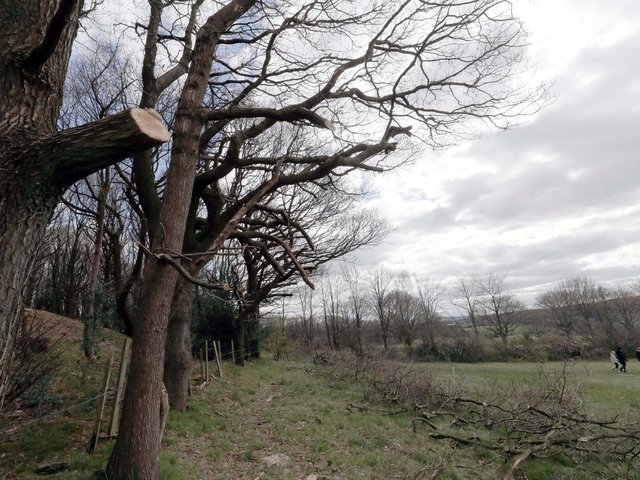 Scores of trees off Hermitage Park in Lepton, have been cut back without the knowledge or the permission of the landowner