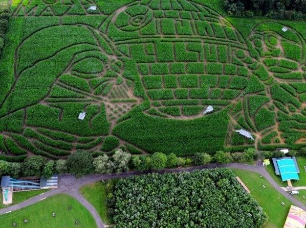 Farmer and avid Star Wars fan Tom Pearcy carved a giant image of some of the original characters from the sci-fi saga into his field of maize plants near York to mark the 40th anniversary of the famous film franchise back in 2017.