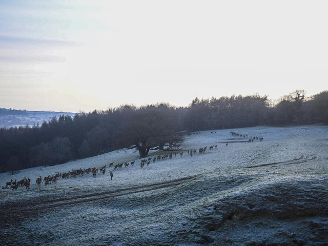 Yorkshire is set for some frosty mornings this week. (PIc: SWNS)