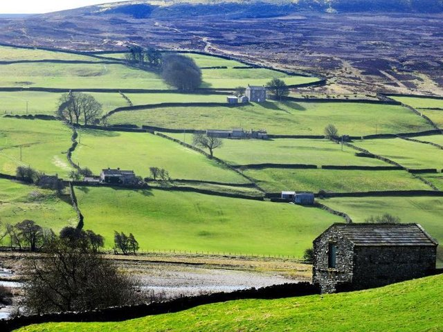 Dry stone walls and stone barns on the outskirts of Reeth in Swaledale, in the Yorkshire Dales. Picture: Gary Longbottom.