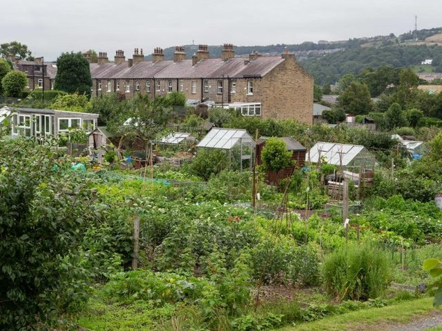 Skircoat Green Allotments, Halifax. Former Grimsby MP Austin Mitchell says that there are fewer allotments than in the past.
