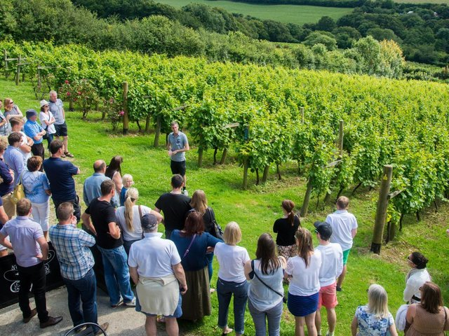 Cornish wine production in the Camel valley.