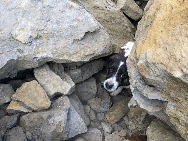 The Jack Russell which was found trapped under rocks for three days near Skinningrove in North Yorkshire