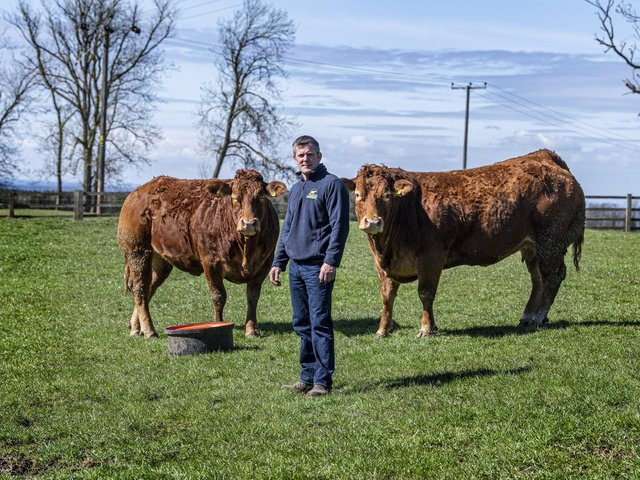 Clive Rowland with his pedigree Limousin cattle